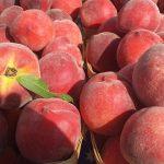 Letnie odchudzanie – brzoskwinie