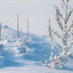 Zimą da się schudnąć -wystarczy tylko…