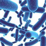 Probiotyki – co muszę o nich wiedzieć?