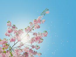 drzewo wiosna