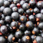 Letnie odchudzanie – owoce