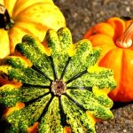 Warzywa dyniowate w diecie odchudzającej
