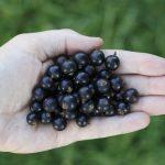Czarno na talerzu – nowy trend w odżywianiu