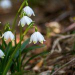 Wiosną zadbaj o swoją odporność (przy okazji schudniesz!)